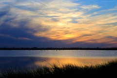 Birdland    part I (gio_running_away) Tags: sunset sea sun lake bird heron nature water clouds twilight italia tramonto sofia saline afterglow weatherreport crepuscolo birdland oasinaturale saltplans