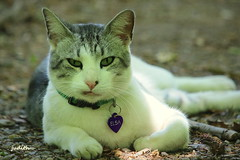 Elsa (judecat (getting back to nature)) Tags: feline elsa pennypackecologicalrestorationtrust