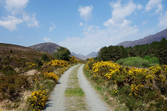 Road to the Kingdom (Philip McErlean) Tags: road ireland sky mountains ancient track path sony kingdom mourne gorse rx100 codownnorthern