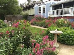 Olallieberry Inn (tiny red warrior) Tags: california roadtrip cambria olallieberryinn