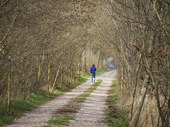 Boy in blue, leaving (andzwe) Tags: road blue trees netherlands dutch leaving path pad nederland blues farewell solo goodbye haag youngman lonesome ruinerwold einder boyinblue haakswold depolletuin