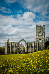 Fountains Abbey (tbnate) Tags: flowers sky nature abbey architecture clouds landscape outside nikon ruins outdoor yorkshire fountains fountainsabbey northyorkshire d5100 nikond5100 tbnate