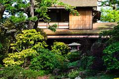 Japanese Tea Garden (dalecruse) Tags: sanfrancisco california green nature japan garden outdoors japanese japanesegarden tea japaneseteagarden teagarden lightroom