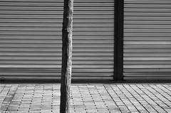 (Jean-Luc Lopoldi) Tags: bw closed noiretblanc sidewalk arbre trottoir pavs abstrait ferm rideaudefer