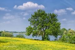 Frhling an der Maas - NL (moni-h) Tags: landscape natur nederland nl maas landschaft radtour frhling niederlande noordbrabant maashees canonefs18135mmf3556isstm eos760d mai2016