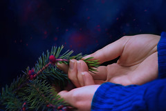 The True Meaning Of Friendship Is Not To Walk Away When Times Get Tough !!!!!! (OdeteCondeOliveira) Tags: hands friendship friend bokeh christmas woman love heartbroken