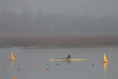 Sculler and Fog (blachswan) Tags: fog australia victoria buoys scull ballarat sculler lakewendouree