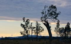 north (dustaway) Tags: trees winter sky landscape australia nsw australianlandscape northernrivers tweedrange richmondvalley seelimcreek seelemscreek seelimscreek