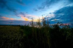 Fence at dawn (Costigano) Tags: ireland sky dublin irish clouds sunrise fence dawn outdoor fields loughshinney fencefriday