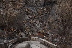 Incendio Monte Pellegrino del 16 giugno 2016 (Carlo Columba) Tags: natura incendio fuoco bosco fumo montepellegrino bruciato riservanaturale boschivo