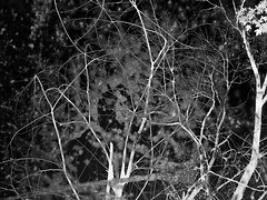 (Rossdxvx) Tags: trees blackandwhite plant abstract tree art texture nature silhouette forest landscape midwest experimental noir shadows michigan surrealism lofi surreal textures minimalism textured 2016