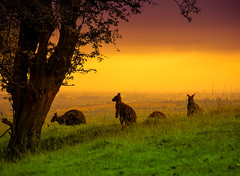 Wallaby Sunset (creativegaz) Tags: wow brilliant