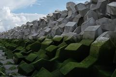 White turning green (Rudie de Seijn) Tags: green white concrete beach cross shape connect dike structure sand blue sky cadzand zeeland netherlands beton kruis vorm structuur dijk groen wit zand strand heldere lucht sony a7 ii tamron 18 270 nederland