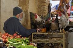 Souk Fez - Morocco (wietsej) Tags: old man chicken zeiss sony morocco fez souk 1670 a3000 sel1670z