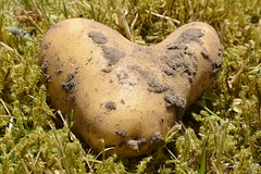 """Where the heart is ... there you are"" (Maria Godfrida) Tags: love nature heart affection potato"