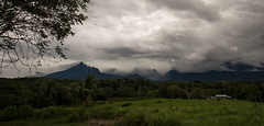 Guilherme.Gnipper-0066 (guilherme gnipper) Tags: picodaneblina yaripo yanomami expedio expedition cume montanha mountain wild rainforest amazonas amazonia amazon brazil indigenous indigena people