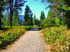 Hiking Trail in Lake Tahoe (Joe Lach) Tags: california forest hiking path laketahoe trail alpine sierranevada valhalla southlaketahoe baldwinbeach tallachistoricsite joelach