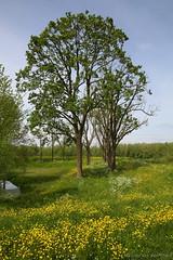 Bloemetjesdijk (Maurits van den Toorn) Tags: flower tree fleur spring boom blume dijk lente arbre baum frhling nieuwpoort bloem voorjaar