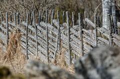 Barknare_DHK8857 (http://gullmars.se) Tags: old nature fence landscape natur rail swedish landskap gärsgård gärdesgård barknare