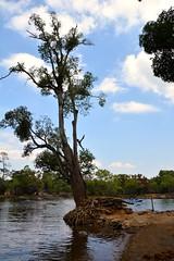 DSC_0181_2 (drs.sarajevo) Tags: india karnataka madikeri kaveririver dubareelephantpark