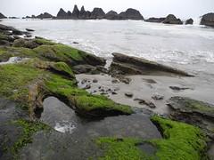 2016-04-27_DSCN5290 (becklectic) Tags: beach oregon pacificocean oregoncoast tidepools sealrock 2016