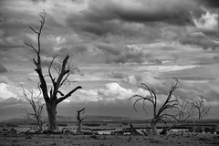 altered state (keith midson) Tags: trees sky rural dry nile drought tasmania arid deadtrees