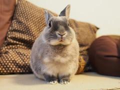 B5076452 (VANILLASKY0607) Tags: pet cute rabbit bunny bunnies field animal landscape outdoor rabbits depth
