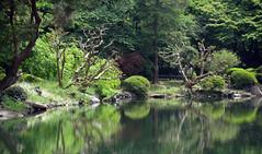 (michel banabila) Tags: green nature water japan tokyo shinjuku refelection shinjukugyoenpark tokyo2016