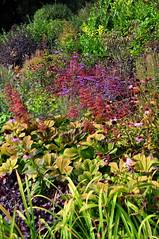 Autumn Flowerbed (charlottehbest) Tags: uk flowers autumn england garden october nationaltrust 2015 dyrhampark dyrham charlottehbest