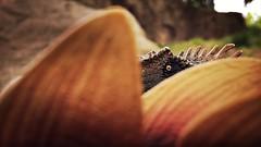 thinning the herd 1 (Chris Blakeley) Tags: seattle toys dinosaur stegosaurus papo allosaurus hipstamatic