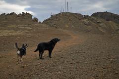 4mai_Thorbjorn_029 (Stefn H. Kristinsson) Tags: dog mountain dogs iceland spring hiking may ma vor hundur sland ganga fjallganga tamron2875mm grindavk hundar grindavik orbjrn nikond800 thornbjorn orbjarnarfell