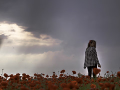 Lo sai che i papaveri (Lumase) Tags: red rain spring overcast poppies irene raining poppyfield