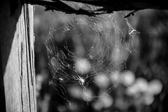 Black and White (carlosguisadogimenez) Tags: blackandwhite canon cobweb 5dmarkiii