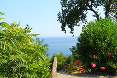 Scorcio (Daphne135) Tags: mare fiori ischia prospettiva