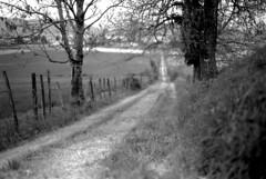 Invitation  la promenade (un proltaire) Tags: nature campagne chemin tmax100 leicam6 xtol11 isre nokton50mm15