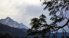 IMG_4782 (malsawm) Tags: india mountains landscape bluesky snowcapped manali himachal himalayas incredibleindia incrediblehimachal