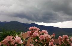 I colori della primavera (Luciana.Luciana) Tags: flowers primavera rose spring colours rosa fiori colori printemps frhling   plose