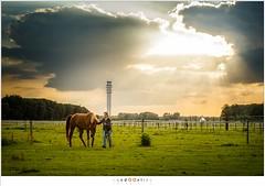 Pireko (nandOOnline) Tags: weide dier manege equus paard paarden nicol equidae arabier hoefdier onevenhoevigen pireko