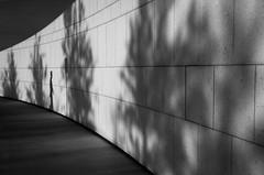 A walk among the trees (QC Doc) Tags: shadow blackandwhite toronto monochrome agakhan ismailicentre