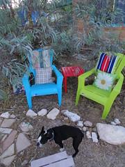 Ivan and yard chairs (EllenJo) Tags: dog pets yard bostonterrier colorful chairs pentax ivan plastic 2016 adirondackchairs june15 ellenjo ellenjoroberts pentaxqs1