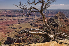 On The Edge (Laymons Pics) Tags: trees arizona grandcanyon northrim