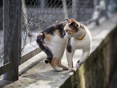 Street cat 146 (Yalitas) Tags: pet cats cat canon kat feline chat kitty gato felino katze katzen kot kedi kass gatta streetcat kotka  kocka  katte  katzchen kottur
