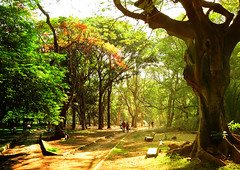 Cubbon Park (Amit Nadgeri) Tags: park morning flowers red people colour nature garden nikon bright path bangalore greenery amit cubbon d3200 nadgeri