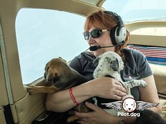Sometimes when you fly there is nothing as special as a great window seat to see the world move below. Mr. Bones & Co in NYC played a huge role in this rescue. You can watch the video on this rescue at http://ift.tt/28PI60N and become a supporter at http: (Pilot.Dog) Tags: pilotdog pilot dog rescue dogs aviation