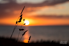 Making the most of the sunset (Chrisipe Photography) Tags: sunset alternative shallowdepthoffield silhouette grass tankerton whitstable sea warm glow canon6d july1st canonef24105mmf4lisusm