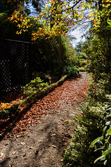 Box Hedging (Jocey K) Tags: autumn trees newzealand christchurch sky plants leaves shadows may pathway monavale