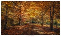 Gold Rush (Dave Whiteman - AU) Tags: autumn landscape australia bluemountains newsouthwales mountainlagoon samsway