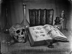 Skull_02 (Nagy Krisztian) Tags: skull negative wetplate collodion