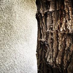 Halfpart (Mr. Grigoryan) Tags: brown tree nature wall grey pattern close structure far simetrik shotoniphone instagram instasize