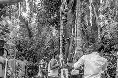 Tamil-SW-003 (gbauer211) Tags: srilanka prozession rituale hinduismus schmerzen tamilen